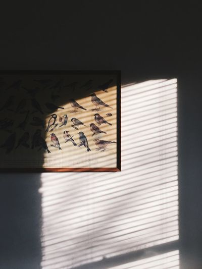 Closeup of a wall with a picture of birds bathed in sunlight from a window. Art Birds Blinds Close-up Contrast Creativity Day Educational Frame Home No People Pattern Picture Poster Shadow Stripes Everywhere Sunlight Sunshine Vignette Wall Window