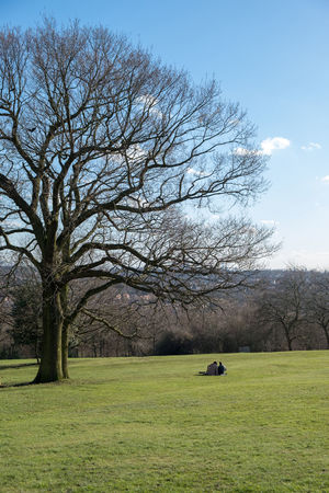 Couple Alexandra Palace Animal Themes Bare Tree Beauty In Nature Branch Day Grass Nature One Man Only One Person Only Men Outdoors People Sitting Sky Tree
