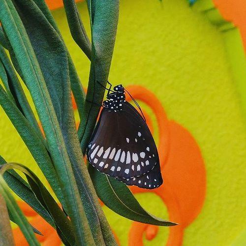 Butterfly Posing Beautiful Totake Pic Loveit Takeapicture Bodinayakanur Bodi Ontheroad