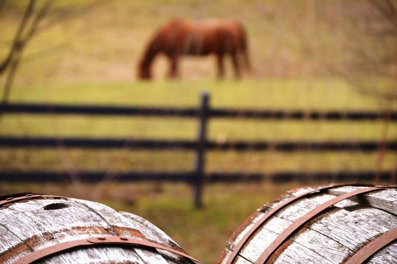Wine cellars against horse grazing on field