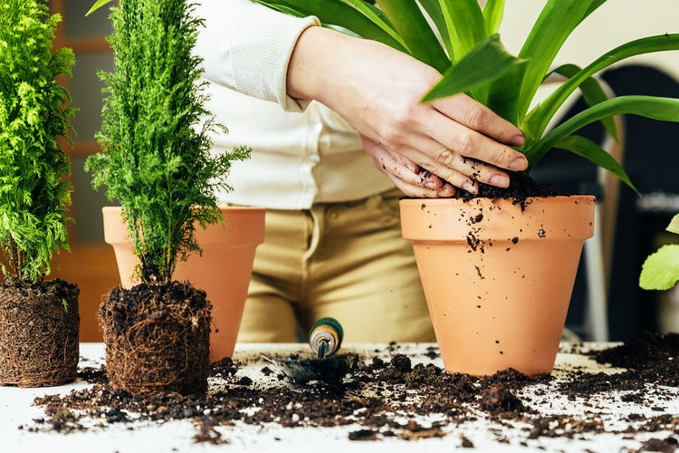 One Person Human Hand Plant Growth Real People Hand Potted Plant Nature Human Body Part Dirt Gardening Lifestyles Planting Midsection Green Color Outdoors Day Holding Flower Pot Finger Human Limb Mud Home Interior Copy Space Flowerpot People Young Adult Lifestyle Seeds Bio Eco Earth