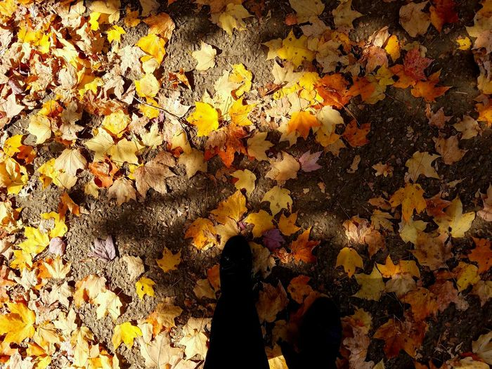 Walking On The Leaves Real People Lifestyles Walking Autumn Leaves Country Autumn Multi Colored Patterns & Textures Nature Striking Colors Day Trip Simple Moment Tranquility Nature_ Collection  Fall Leaves Still Life Photography Fine Art Photography Autumn Colors Shadows & Lights