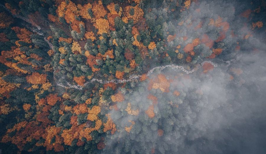 Full frame shot of trees in forest. autumn foliage hing angle aerial view