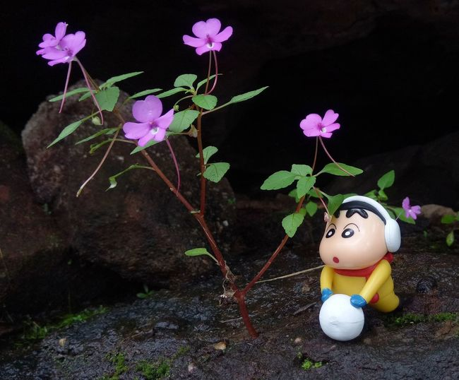 Pha Tam Rock Cartoon Flower Growth Leaf Model Nature No People Outdoors Plant Spring