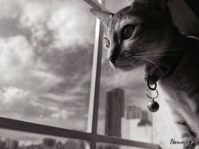 looking out the seeing the world thru the glass Mobilephotography Photography Petphotography Catphotography LGV30 LGV30photography Lgv30+ Window Pets Looking Through Window Close-up Domestic Cat Kitten Stray Animal Cat Feline Whisker At Home Animal Eye Animal Face Eye