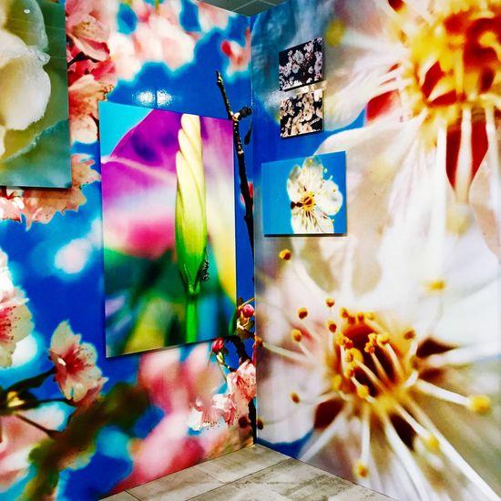 Artfairtokyo !! Art Fair Tokyo !! Mikaninagawa Colors アート 東京 Happy