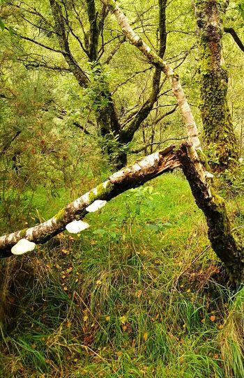 Fungus 🍄 Rotting Wood Huawei P9 Leica Wales❤