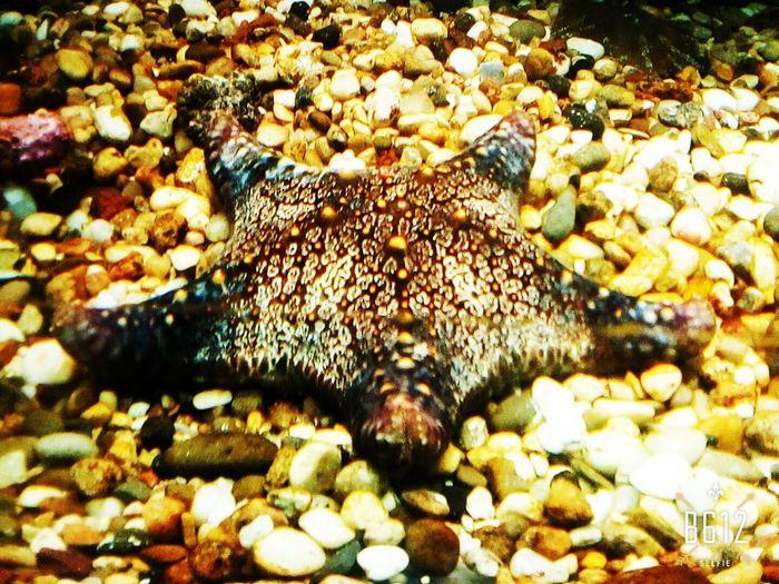 Мооская звезда🌊 Морская звезда черноеморе🌊 океанариум Сочи лазаревское Море звезда  Enjoying Life