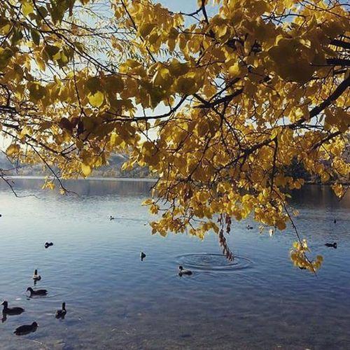 Hüzün... Ankara Türkiye Gecmis Autumn colors Natural Autumn🍁🍁🍁 Bird Tree Water Branch Autumn Lake Leaf Reflection Water Bird