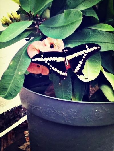Beautiful Butterfly :)
