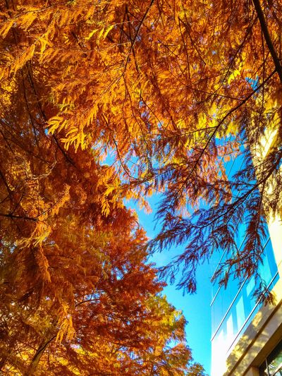 Forever in love with Fall. Share Your Adventure Showcase: December Fall Days Beautiful Day Fall Foliage Autumn Colors Autumn Leaves Make Magic Happen How Do You See Climate Change? Color Explosion Life In Motion
