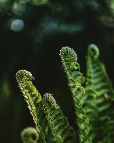 Springtime Springtime Spring #forest Nature_collection Nature Photography Beatiful Nature Stillife SONY A7ii Springtime Blossoms Sigms85mmArt Close-up Green Color Plant