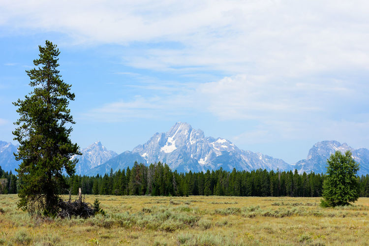 Grand Teton Grand Teton National Park  Grand Teton Wyoming USA Grand Teton National Park, Wyoming Grand Tetons Grand Tetons National Park Beauty In Nature Blue Sky Cloud - Sky Environment Glacier Grand Teton Grass Land Landscape Meadow Mountain Mountain Peak Nature Plant Scenics - Nature Sky Snowcapped Mountain Tranquil Scene Tranquility Tree