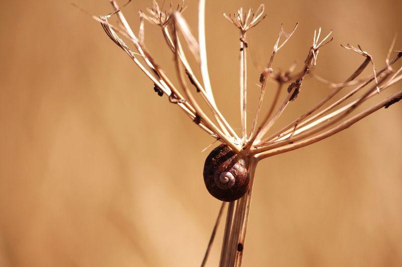Macro Shot Of Snail Shell On Twig
