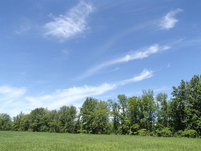 Parc national de Plaisance Plant Tree Sky Growth Green Color Cloud - Sky Beauty In Nature Tranquil Scene Landscape Outdoors Scenics - Nature