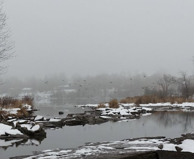 Misty, moist day. Beauty In Nature Chilly River Cold Landscapes Cold Temperature Frozen Ice Lake Landscape Nature No People Outdoors Sky Snow Snowing Water Weather Winter Winter Wonderland