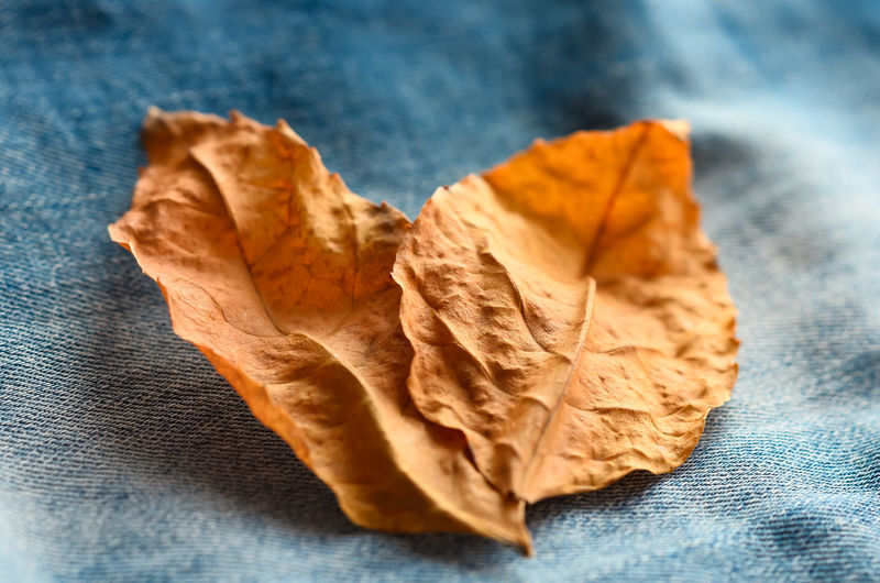 Close-up of dried autumn leaf on table