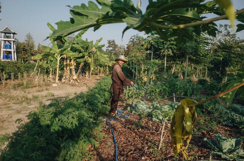 Man walking by plants