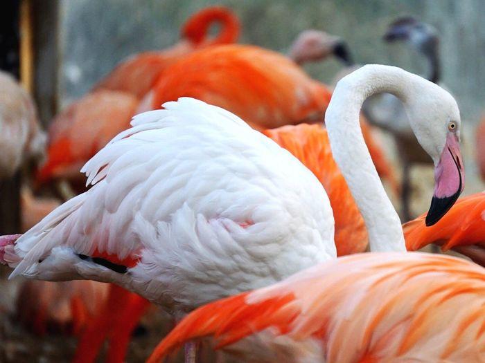 Flamingos on feeding grounds