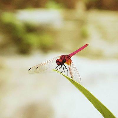 You're the one in a million Dragonfly Macro Olympus XZ-1 Olympus Eyeem Market EyeEm Best Shots EyeEm Nature Lover EyeEm Gallery