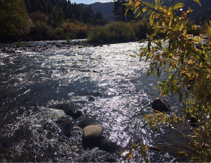 Flowing River; Truckee ;oOutdoorstTreebBeauty In Nature