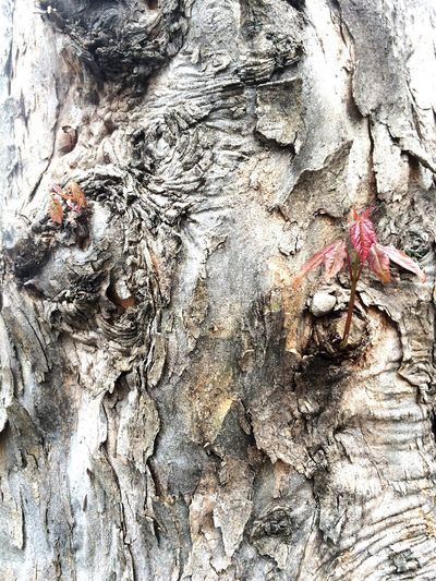 Tree Treescollection Newborn Tree Branches Goodafternoon Natural Red IPhoneography Parcer