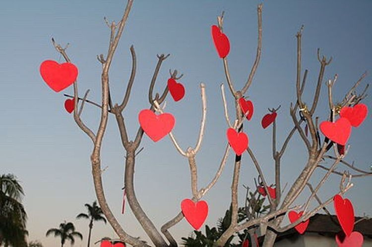 Red Celebration Heart Shape No People Tree Sky Close-up Outdoors Nature Day Make A Wish