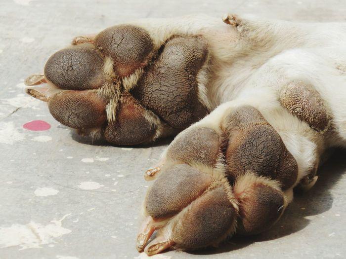 High angle view of rabbit sleeping