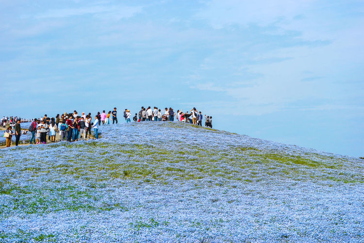 2017 MAY 06, IBARAKI JAPAN. Tourists at Hitachi Seaside Park. Hitachi Seaside Park is the most popular place to travel on spring in JAPAN. Ecology Environment Destination Crowd Vacation Landmark People Area ASIA Background Beautiful Beauty Bloom Blossom Blue Day Famous Farm Field Flora Floral Flower Garden Hill Hitachi Ibaraki Japan Landscape Life Nature Nemophila Outdoor Park Place Plant Seaside Season  Sightseeing Sky Space Spring Stem Tourism Tourist Travel White Yard Editorial  Popular Sunny
