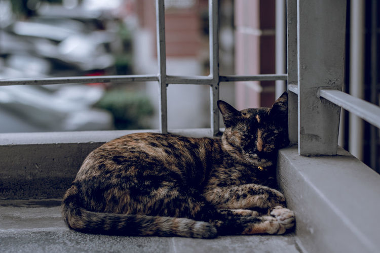 Animal Cat Day Domestic Domestic Animals Domestic Cat Feline Focus On Foreground One Animal Pets