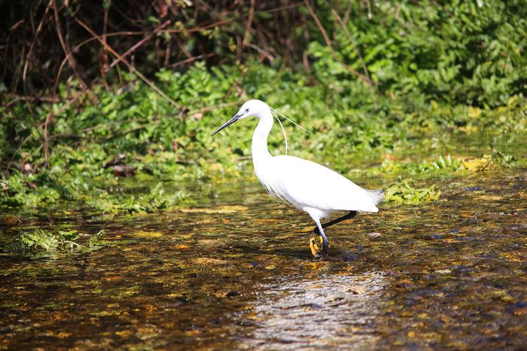 White bird perching on a land
