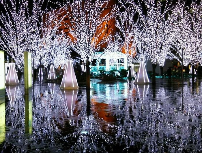 Reflection Night City Tree Lightuptrees Illmination Seasonal Decoration