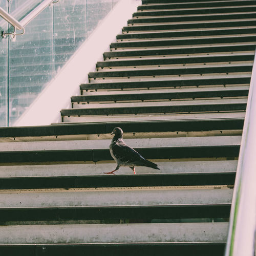 Low angle view of bird perching on staircase