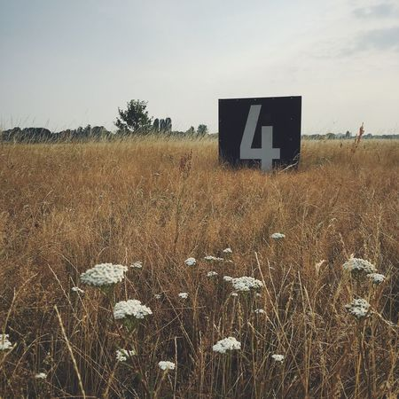 Wiese  Fields Of Gold Tempelhofer Feld Berlin Sign Nature