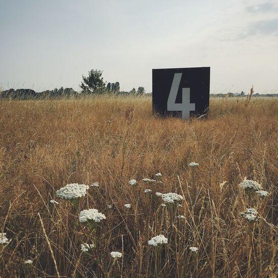 Wiese  Fields