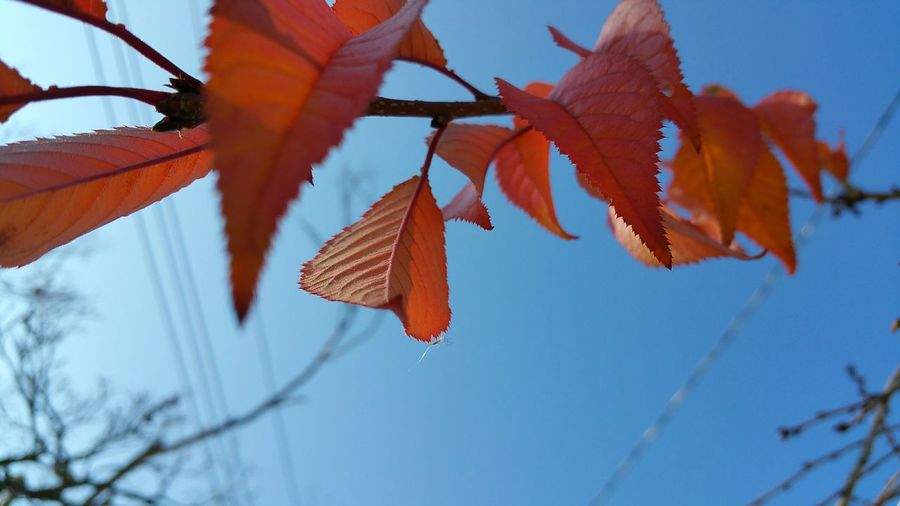 Low Angle View Of Autumn Plant Against Blue Sky