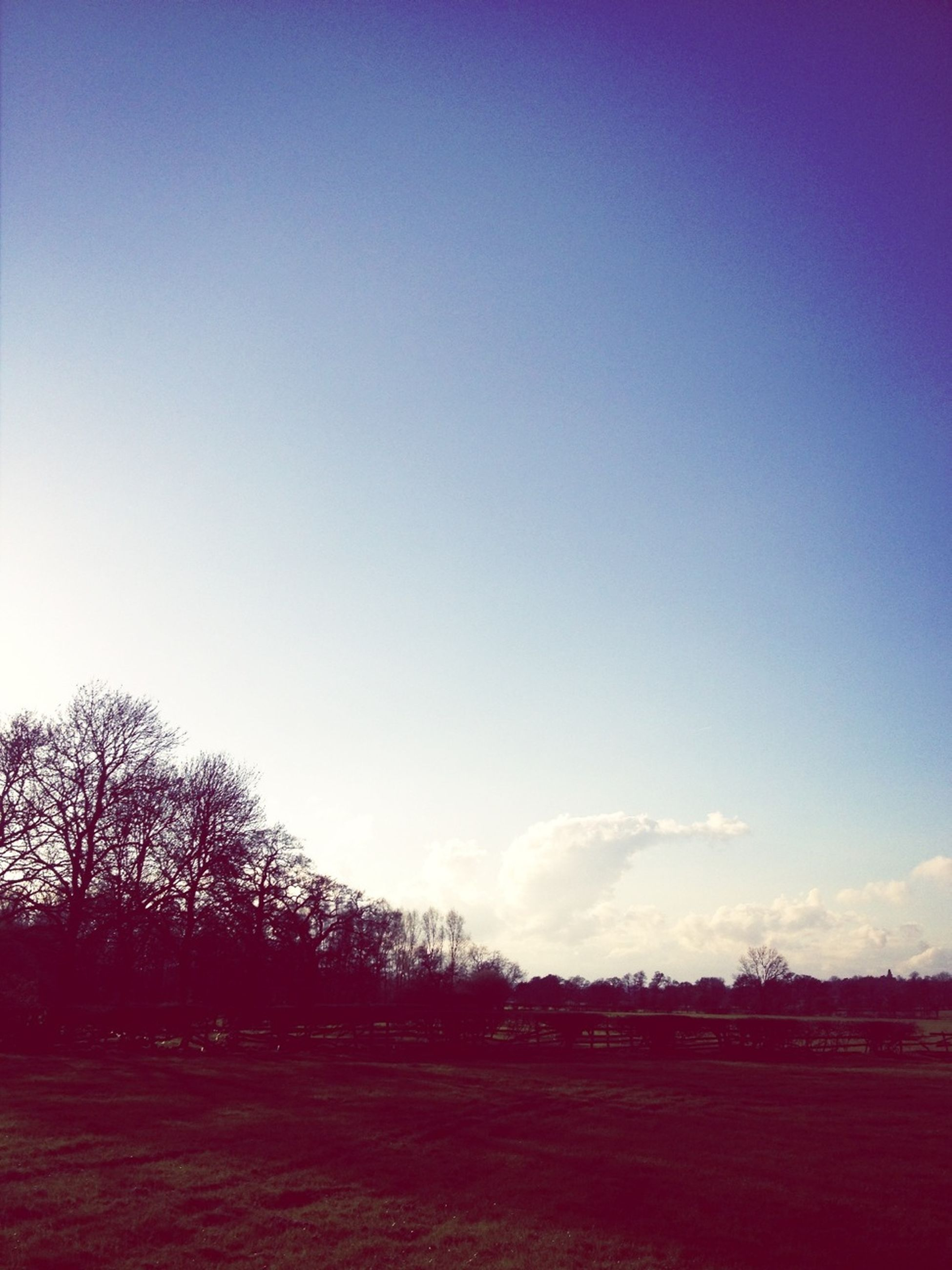 copy space, clear sky, tree, blue, tranquility, tranquil scene, landscape, sky, field, scenics, beauty in nature, nature, silhouette, road, outdoors, dusk, no people, non-urban scene, remote, sunset