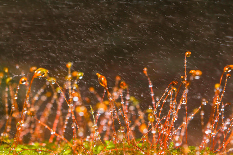 Close-up of water drops on plants during rainy season