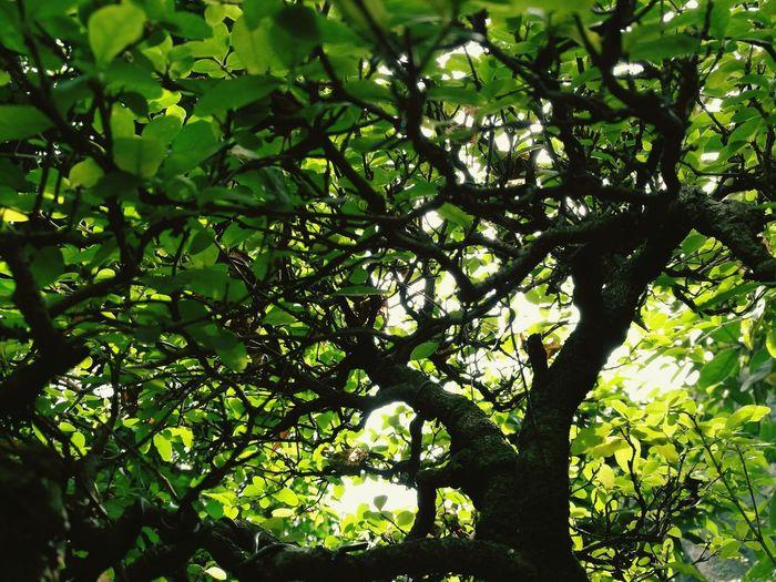 Life🍃 Bonsai Tree