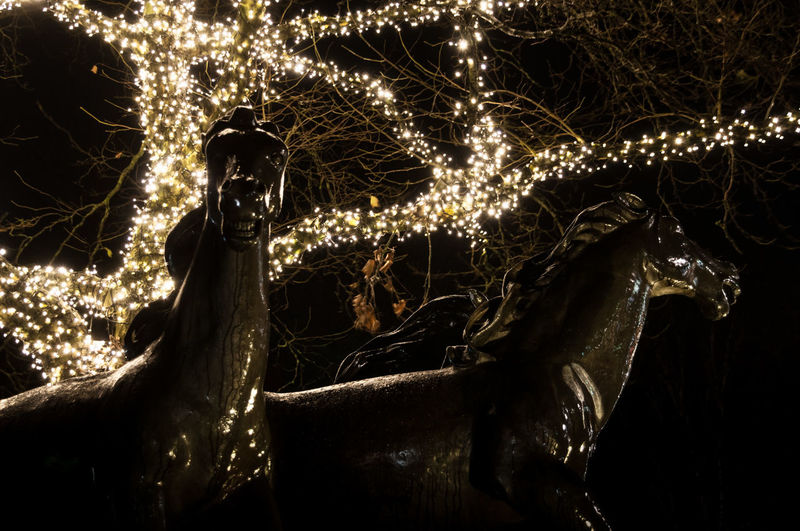 Christmas Lights Focus On Foreground Horse Night Pferdemarkt Statue Tree Wet