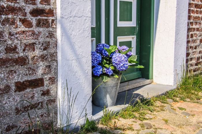 Denmark Farmhouse Hydrangea Architecture Beauty In Nature Building Exterior Built Structure Close-up Day Door Flower Flower Head Fragility Freshness Growth Nature No People Outdoors Plant Purple Sunlight Window