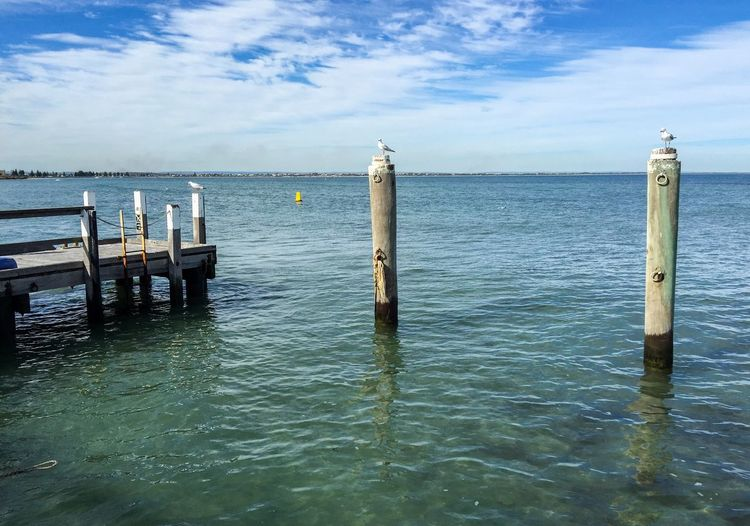 Seagulls perching on wooden posts by pier in sea during sunny day