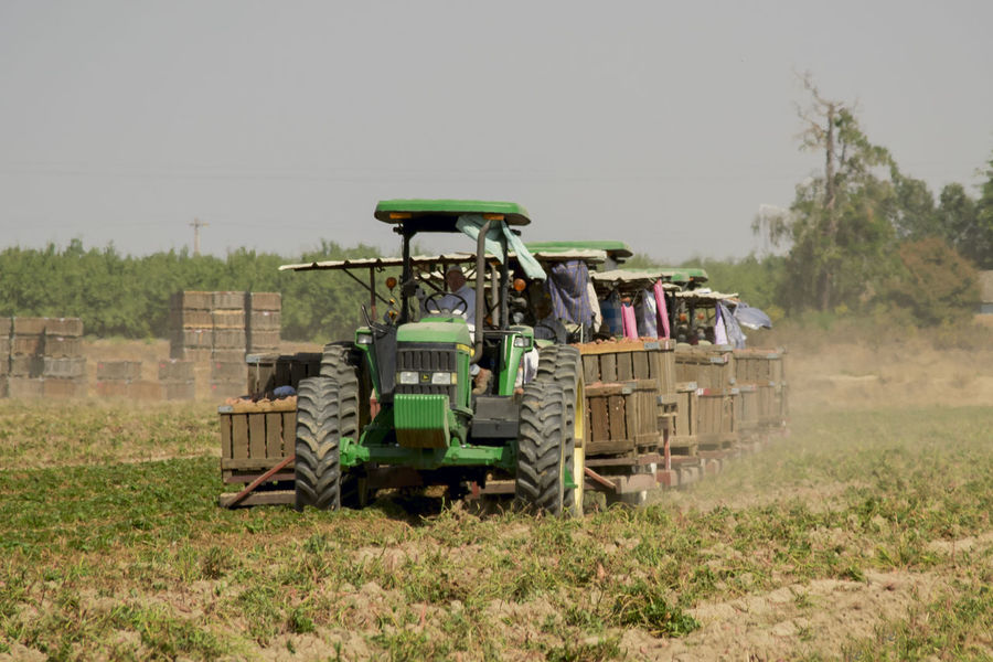 Agriculture Farm Potato Day Field Fieldworker Grass Land Vehicle Landscape Nature Outdoors Rural Scene Sweet Transportation SoulPineapple Soul Pineapple