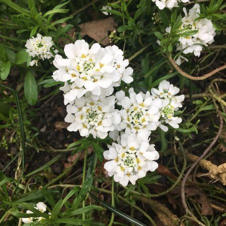 White Color Flower Nature White Growth Freshness Fragility Beauty In Nature Petal No People Spring Day Blooming Close-up Outdoors Flower Head EyeEm Ready