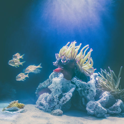 🐠God, the greatest artist of all time🐟~ Blue Underwater Sea Life Nature UnderSea Beauty In Nature Water Aquarium Animal Themes Sea Nature Dive Adventure Scuba Diving Underwater Diving Beauty In Nature Animal Wildlife Saltwater Fish Grandturk Turksandcaicos Pets