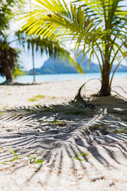 shadow of a palm tree in bora bora French Polynesia Pacific Travel Beach Beauty In Nature Coconut Palm Tree Lagoon Land Leaf Nature No People Outdoors Palm Leaf Palm Tree Plant Sand Sea Shadow Sky Tahiti Tranquility Travel Destinations Tree Tropical Climate Water The Great Outdoors - 2018 EyeEm Awards