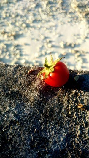 My favorite type to of tomato. 😌❤ Tomato Cherrytomato My Favorite  Sunlit Beauty Redness Light And Shadow Evening Sun Beachside EyeEm Best Shots at an Island In Maldives ❤🌞🍅