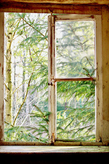 Trees and plants seen through window of house