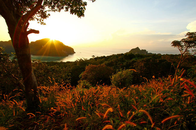 Beautiful sunset in the sea on Phi Phi Island viewpoint at Krabi, Thailand Natural PP Island Thailand Beauty In Nature Day Growth Island Landmark Landscape Mountain Nature No People Outdoors Plants And Flowers Scenics Sea Sky Sunset Sunshine Tranquil Scene Tranquility Tree View Point Water