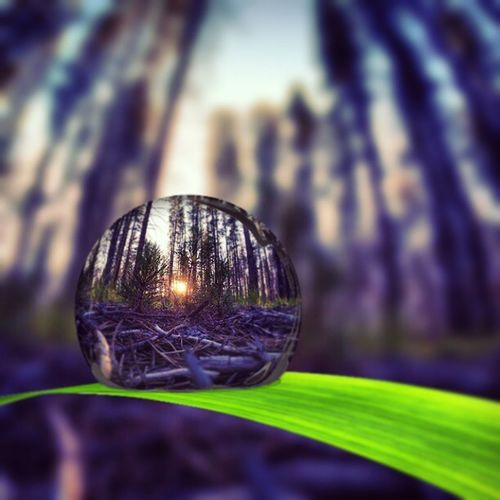 Forest Sunset through a water droplet. Gopro Hero3plus Montana Snapseed Pipcamera Layering Playingwitheditingapps Nature Rain
